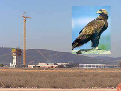 Airport and endangered eagle